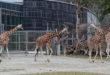 Tierparkbesuch in der Corona-Pandemie